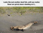 Looks Like Just Another Dead Fish...