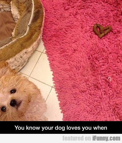 You Know Your Dog Loves You When...