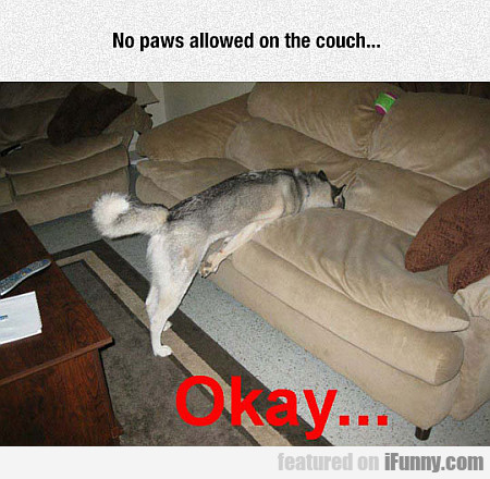 No Paws Allowed On The Couch