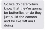 So Like Do Caterpillars?