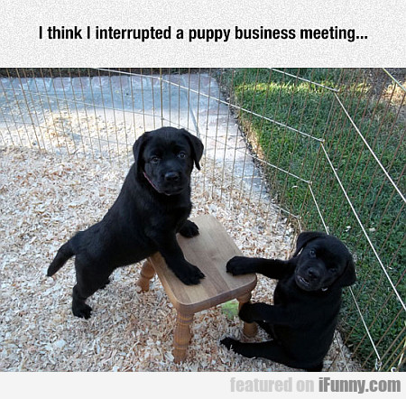I Think I Interrupted A Puppy Business Meeting...