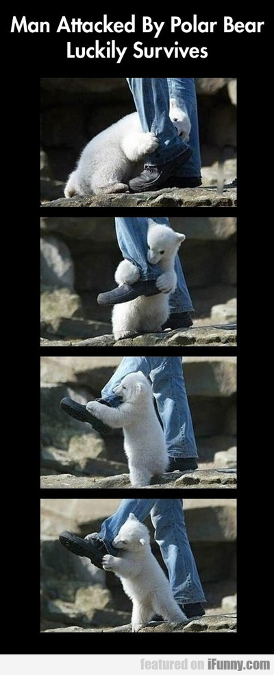 Man Attacked By Polar Bear Luckily Survives...