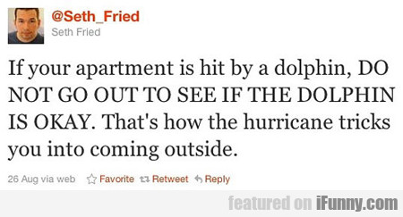 If Your Apartment Is Hit By A Dolphin...