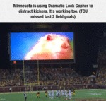 Minnesota Is Using Dramatic Look Gopher...