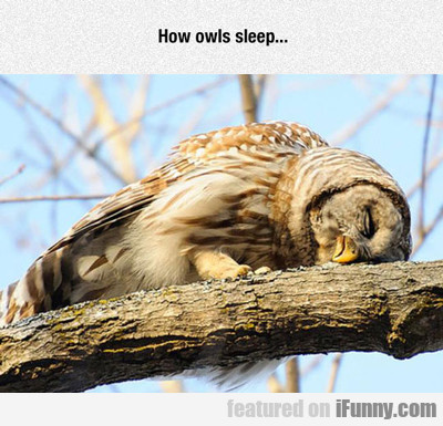 How Owls Sleep...
