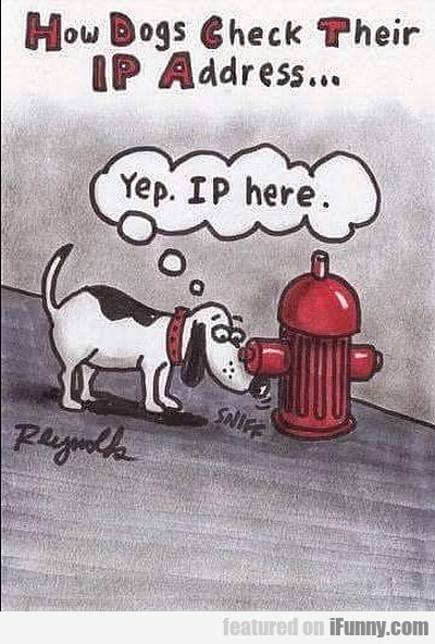 How Dogs Check Their Ip Address...