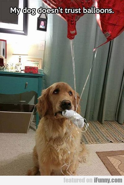 my dog does't trust balloons