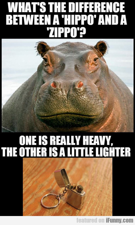 What's The Difference Between A Hippo And A Zippo