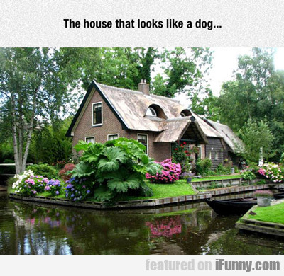 The House That Looks Like A Dog...