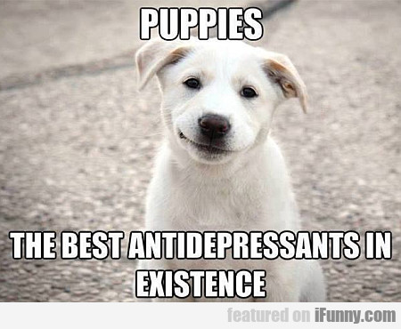 Puppies, The Best Antidepressants In Existence