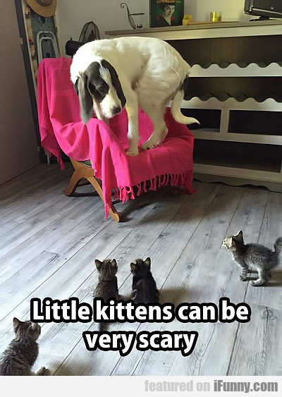 Little Kittens Can Be Very Scary
