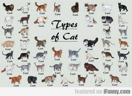 cat breed with no tail