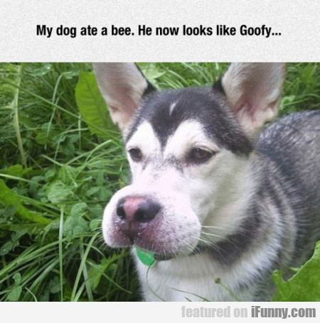 My Dog Ate A Bee