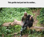 This Gorilla Had Just Lost