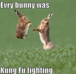 Every Bunny Was Kung Fu Fighting...
