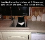 I Walked Into The Kitchen At 5;30 Am