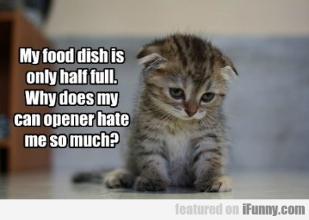 my food dish is only half full