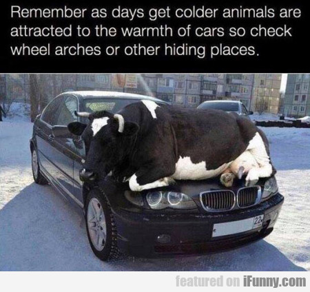 Remember As Days Get Colder Animals Are Sttracted