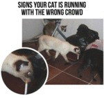 Signs Yur Cat Is Running