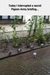 Today I Interrupted A Secret Pigeon Army...