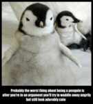 Probably The Worst Thing About Being A Penguin...