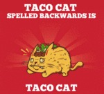 Taco Cat Spelled Backwords.