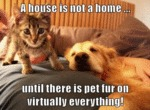 A House Is Not A Home Until There Is Pet