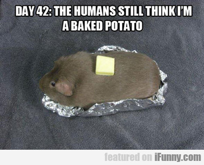 Day 42: The Humans Still Think I'm A Baked Potato