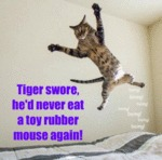Tiger Swore He D Never Eat A Toy