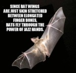 Since Bat Wings Are Just Skin...