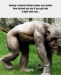 Seeing A Shaved Chimp...