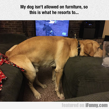 My Dog Isn't Allowed On Furniture