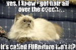 Yes, I Know I Got Hair All Over The Couch...