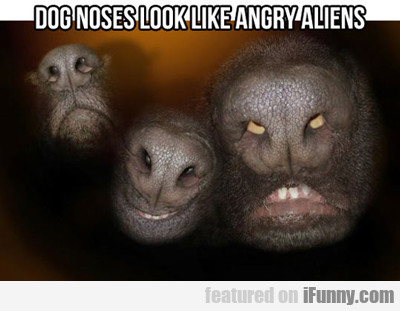 Dog's Noses Look Like Angry Aliens...