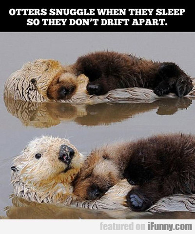 Otters Snuggle When They Sleep...