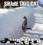 Share This Cat