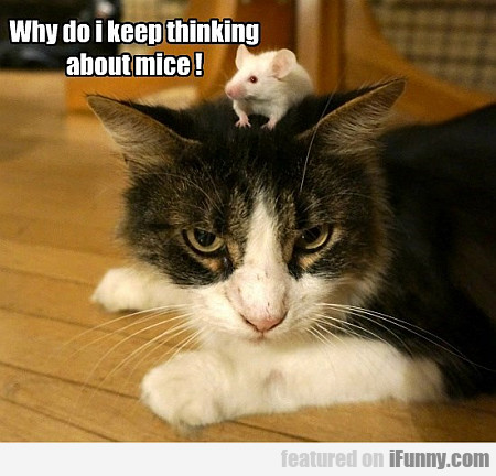 why do i keep thinking about mice?