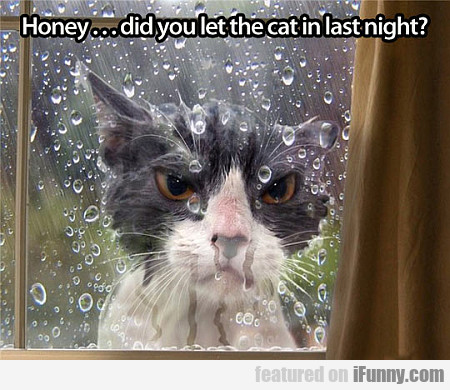 Honey... Did You Let The Cat In Last Night?