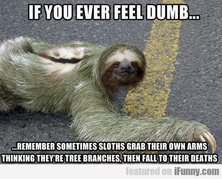 If You Ever Feel Dumb...