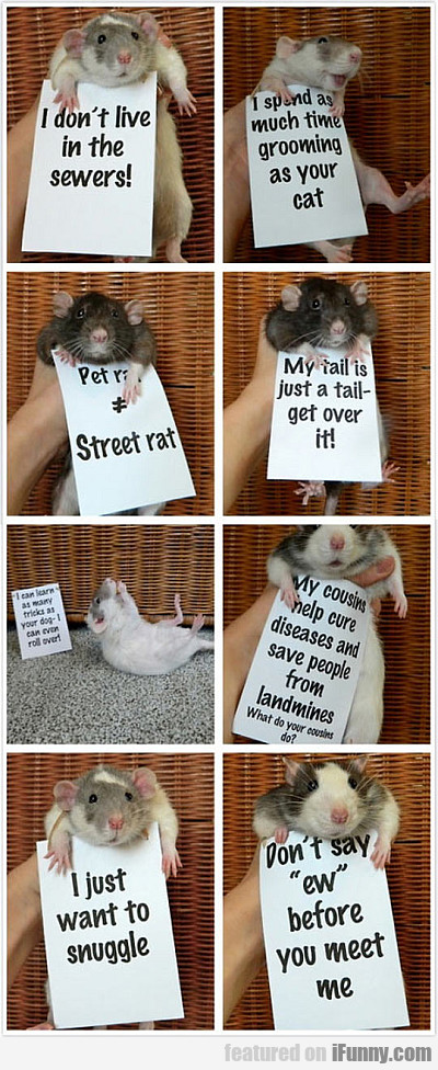 Rats Are So Misunderstood...