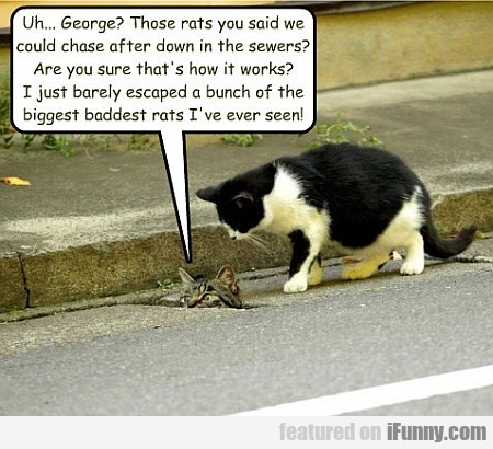 Uh... George,, Those Rats You Said We Could Chase