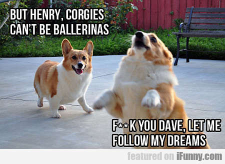 But Henry, Corgies Can't Be Ballerinas...