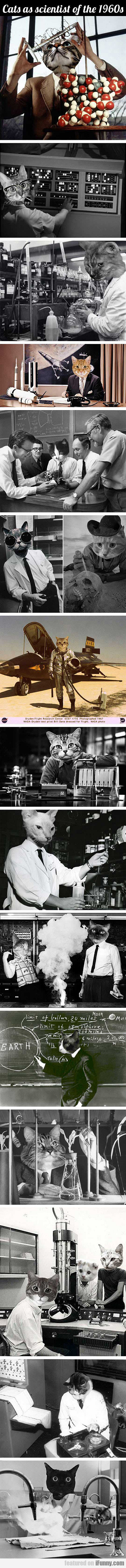 Cats As Scientists Of The 1960s (compilation)