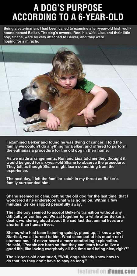 A Dog's Purpose According To A 6-year-old