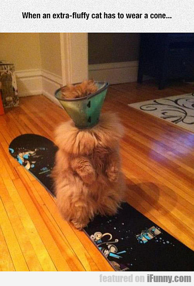 When An Extra-fluffy Cat Has To Wear A Cone...