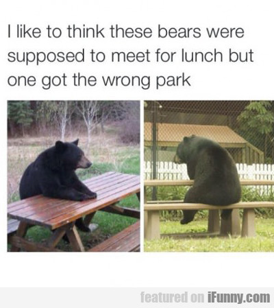 I Like To Think These Bears Were Supposed To Meet