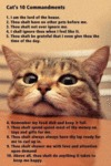 Cats 10 Commandment
