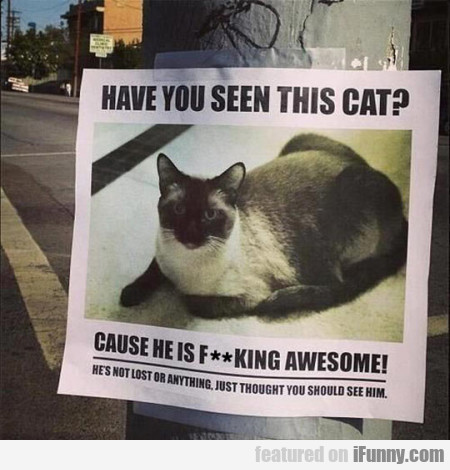 have you seen this cat cause he is