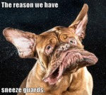 The Reason We Have Sneeze Guards
