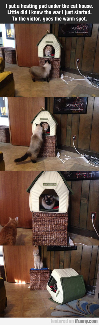 I Put A Heating Pad Under The Cat House